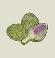 artichoke hand drawn isolated composition with vector image vector image