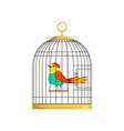 beautiful character of colorful bird in cage
