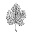 beautiful detailed leaf botanical hand drawn vector image vector image