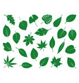 collection green leaves vector image