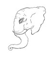 head of elephant vector image