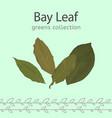 bay leaf image vector image