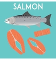 Salmon isolated and slices of red fish vector image