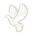 sketch pigeon vector image