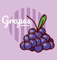 grapes fruits cartoon vector image vector image
