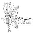 magnolia flower vector image