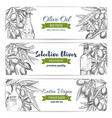 olive oil banners of sketch olives vector image