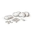 hand drawn potato vector image vector image