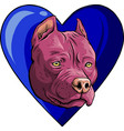 head pitubull dog with vector image