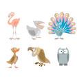 six funny birds vector image vector image