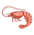 Decorative isolated shrimp vector image