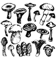 collection mushrooms vector image vector image