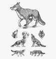 gray wolf set gray wolf a predatory beast wild vector image vector image
