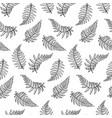 pattern of fern leaf vector image vector image