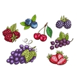 Berries fruits set color sketches vector image vector image