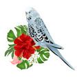 budgerigar home pet blue pet parakeet vector image