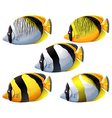 Five colourful fishes vector image vector image