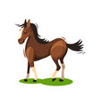 flat design of lovely brown horse walking vector image vector image