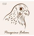 Peregrine Falcon vector image vector image