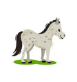 pony standing on green grass side view gray vector image vector image