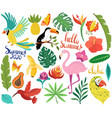 summer icons with tropical birds and exotic vector image