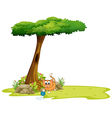 An orange cat playing under the tree vector image vector image