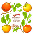 apple elements set vector image