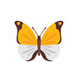colorful butterfly design vector image vector image