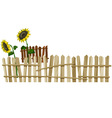 curve wooden fence and flowers sunflower vector image