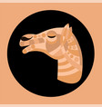 ornated camel head vector image