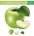 Green apple on white background vector image vector image