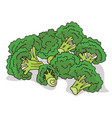 isolate ripe broccoli stalks vector image