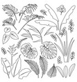 tropical leaves and flowers outline set vector image