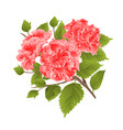 branch pink hibiscus tropical flowers on a white vector image vector image