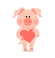 cartoon little pig with heart in hand year of vector image vector image