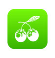 eco berry icon green vector image
