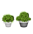 Green Trees in Terracotta Flower Pots vector image vector image