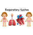 Respiratory system in little girl vector image vector image
