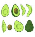 avocado set vector image vector image