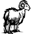 Bighorn Sheep vector image