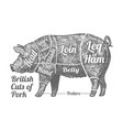 cuts pork vector image