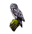 long-eared owl eagle owl from a splash vector image vector image
