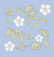 set sakura flowers elements collection of vector image vector image