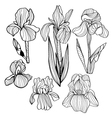 Blooming and budding iris flowers black and white vector image vector image