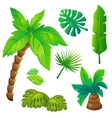 Stylized Jungle Trees Set vector image vector image