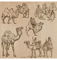 Camels - An hand drawn Converted vector image