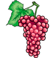 red grapes fruit cartoon vector image