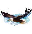 soaring bald eagle color realistic portrait vector image