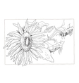 Sunflower in black and white vector image vector image