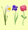 beautiful spring flower botanical bloom watercolor vector image vector image